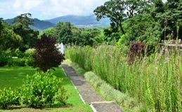Мартиника, живописный город румян Morne в Вест-Индиях стоковая фотография rf