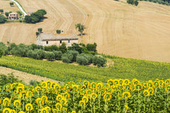 Марты (Италия): ландшафт лета Стоковое Изображение