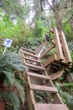 Маршрут побега цунами лестниц поднимая от бечевника t стоковые фотографии rf