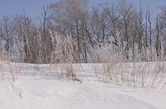 марш Снег сверкнает Банк Волга Стоковое фото RF