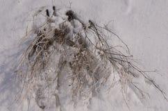 марш Снег сверкнает Банк Волга Стоковые Фотографии RF