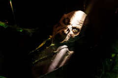 Маска ужаса всматривается из гроба Стоковое Фото
