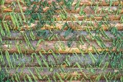 Маскировочная сетка для войск зеленого цвета Стоковые Изображения