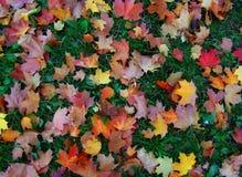 Масленица осени от красочных ярких листьев Стоковое Изображение
