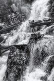 Маслобойка на падениях папоротника стоковая фотография rf