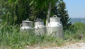Маслобойки молока в природе Стоковое Изображение RF