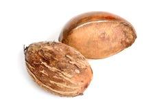 Масло дерева ши чокнутое или плод karite белизна изолированная предпосылкой стоковые изображения