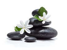 Массажируйте цветки tiare, свечу и черную каменную спу Стоковая Фотография