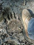Массивная печать черного медведя стоковые фотографии rf
