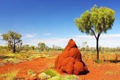 Массивнейшая насыпь в австралийском захолустье, западная Австралия термита Стоковое Изображение RF