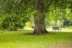 Массивнейшее дерево Стоковое Изображение RF