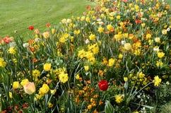 Массив желтых, оранжевых и белых цветков стоковые изображения