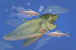 Массы пресноводной рыбы Стоковое Фото