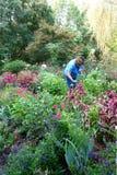 Мастерский садовник работая в ботаническом саде стоковое изображение