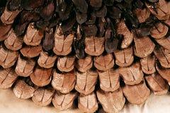 Масштабы Брайна конуса сосны Стоковые Фото