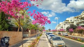 Масштаб другого цвета в израильской улице стоковое фото rf