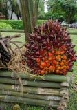 Масличная пальма Стоковые Изображения