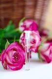 Масло ароматности розовое (естественный дух) Стоковое фото RF