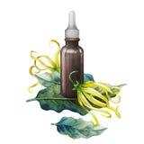 Масло ylang ylang акварели иллюстрация штока