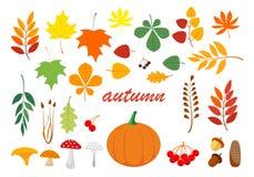 Материалы осени красивые естественные Листовки, грибы, хворостины, конусы, жолуди, трава бесплатная иллюстрация