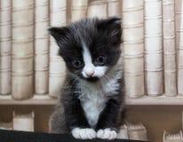 Матрос котенка Стоковая Фотография