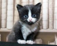 Матрос котенка Стоковое Изображение RF