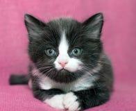 Матрос котенка Стоковая Фотография RF