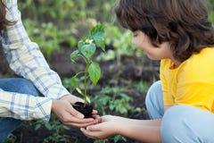Мать дает его солнцу семенозачаток в саде лета Стоковые Фотографии RF