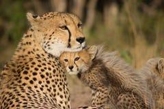 Мать гепарда стоковое изображение rf