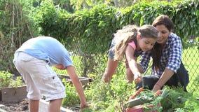 Мать и дети работая на уделении совместно сток-видео