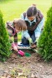Мать и дочь засаживая шарики тюльпана Стоковые Изображения