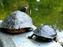 Мать и черепаха daugher стоковая фотография rf