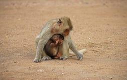 мать обезьяны младенца Стоковое Изображение