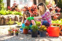 мать дочи садовничая совместно Стоковое фото RF