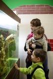 Мать при сыновьья смотря черепаху Стоковые Изображения