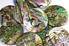 Мать раковин жемчуга Стоковое Изображение