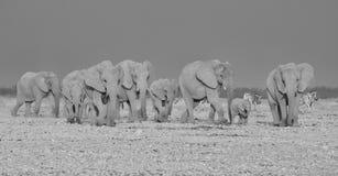 мать семьи слона кокоса икры младенца около стержня ладони Стоковое Фото