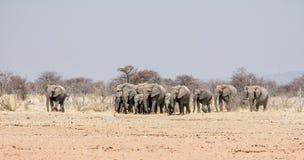мать семьи слона кокоса икры младенца около стержня ладони Стоковые Фотографии RF