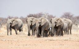 мать семьи слона кокоса икры младенца около стержня ладони Стоковое Изображение RF