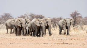 мать семьи слона кокоса икры младенца около стержня ладони Стоковое Изображение