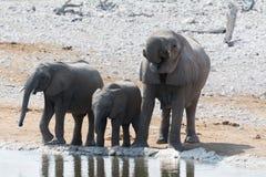 мать семьи слона кокоса икры младенца около стержня ладони стоковая фотография