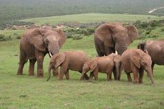 мать семьи слона кокоса икры младенца около стержня ладони Стоковое фото RF
