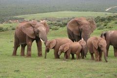 мать семьи слона кокоса икры младенца около стержня ладони Стоковая Фотография RF