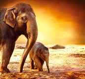 Мать слона с младенцем Стоковое Изображение
