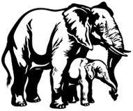 Мать слона с младенцем Стоковое Изображение RF