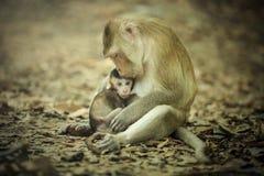 Мать newborn обезьяны Стоковые Изображения RF