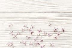 мать s дня счастливая положение весны плоское с сиренью tenderl цветет I Стоковая Фотография RF