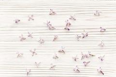 мать s дня счастливая положение весны плоское с сиренью tenderl цветет I Стоковые Изображения RF