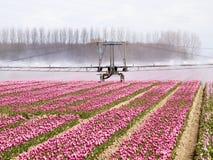 Машина брызга над полем тюльпана стоковые фото