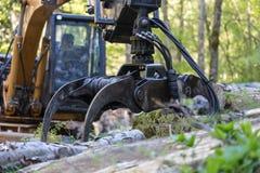 машина леса стоковые изображения rf